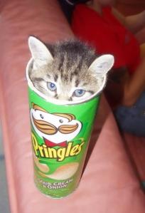 Kat i Pringles æske